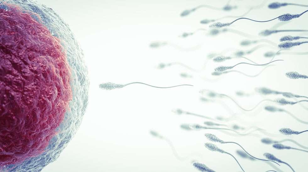 2. raskausviikko