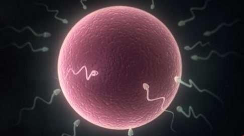 Raskausviikolla 2. munasolu on valmis hedelmöittymään.