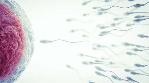 Isän 3. raskausviikko: Hedelmöittyminen
