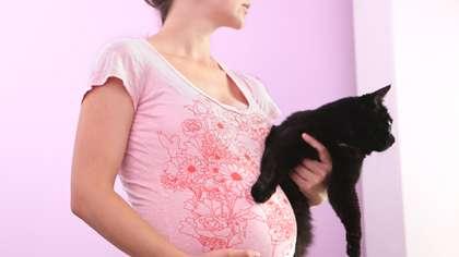 Toisin kuin uskotaan, kissa ei ole ainoa, eikä edes vaarallisin toksoplasmoosin levittäjä.