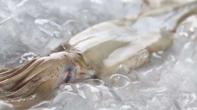 Kuvan mustekala ei ole syyllistynyt yhdenkään naisen hedelmöittämiseen.