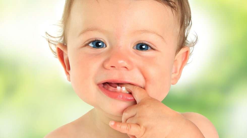 Hampaat puhkeavat usein pareittain. (Kuva: Shutterstock)
