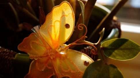 Perhoset koristavat Toivon hautaa. Kuva: Kirsti Laurinolli