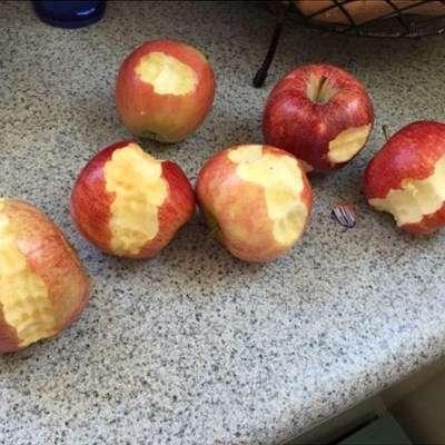Äiti, söin ainakin kuusi omenaa! Kuva: @aejamba