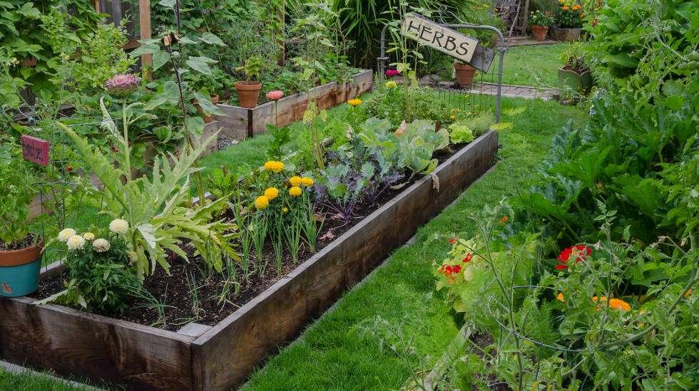 Puutarha kukoistaa juhannuskasteella. (Kuva: Shutterstock)