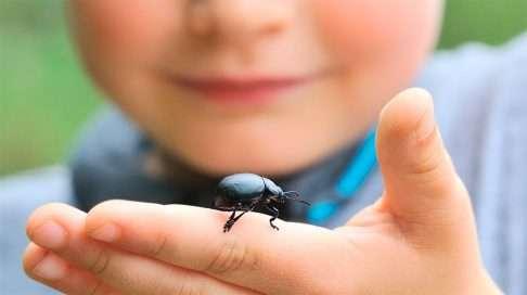 Koppakuoriaiset ovat komeita hyönteisiä. (Kuva: Shutterstock)