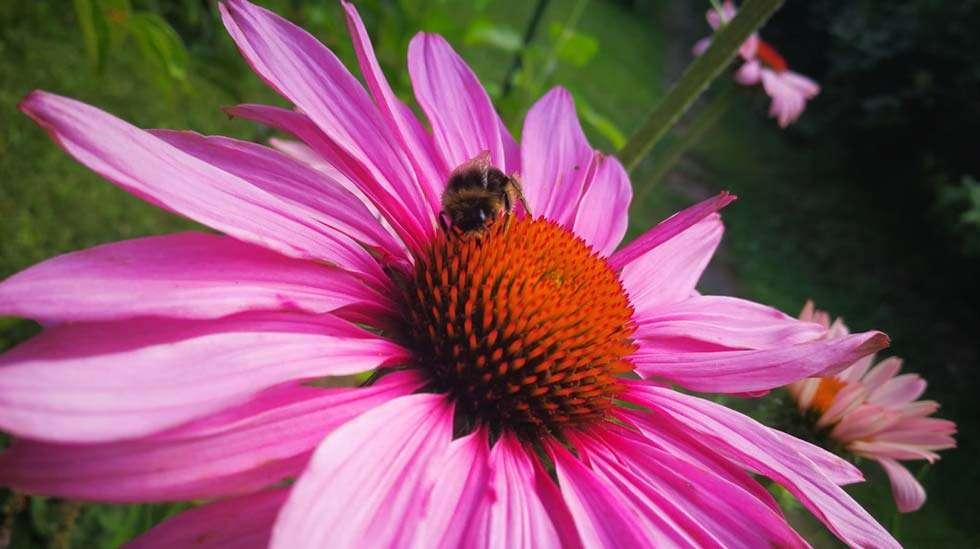 Myös kaikenlaiset kukkia ja mehiläisiä käsittelevät jutut naurattavat kirjoittajaa tällä hetkellä suuresti. Kuva: @kaikkeakolme