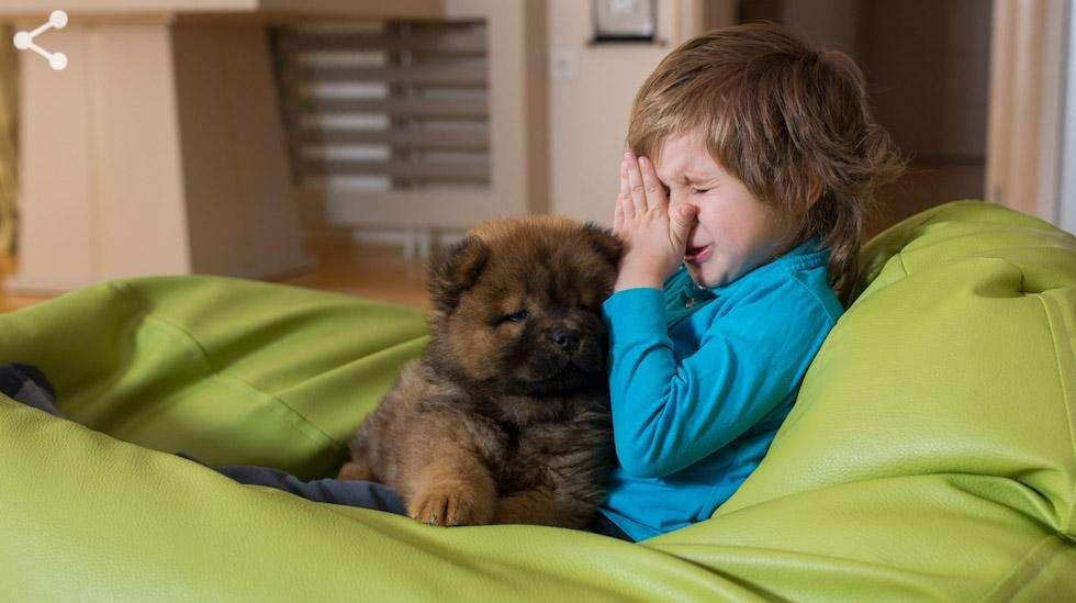 Eläinallergia aiheuttaa usein nenäoireita, kuten nenän vuotamista, tukkoisuutta ja aivastelua. Kuva: iStock
