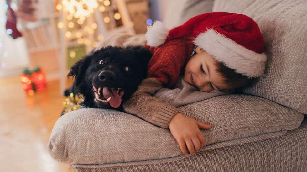 Lapsi saattaa ymmärtämättömyyttään sujauttaa perheen koiralle ruokia, jotka aiheuttavat myrkytyksen. Kuva: iStock